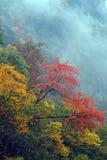 La collina lascia il colore rosso dappertutto Fotografie Stock