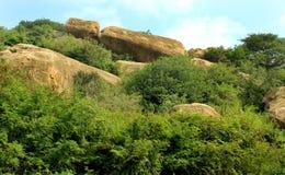 La colline bascule, des arbres avec le paysage de ciel Image stock
