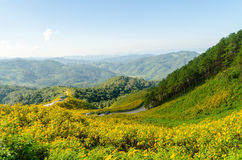 La colline du tournesol mexicain avec Mountain View Photographie stock