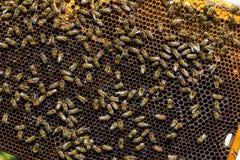 La colmena de la abeja es primer del tiro Imagen de archivo libre de regalías