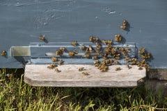 La colmena de la abeja es primer del tiro Foto de archivo