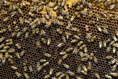 La colmena de la abeja es primer del tiro Fotos de archivo