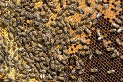 La colmena de la abeja es primer del tiro Imagenes de archivo
