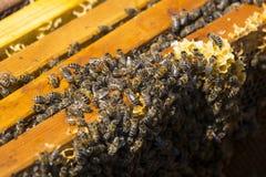 La colmena de la abeja es primer del tiro Imágenes de archivo libres de regalías