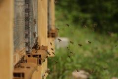 La colmena de la abeja saca la puerta del aterrizaje Fotografía de archivo