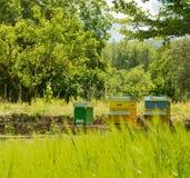 La colmena de abejas en el Casentino verde en Toscana Foto de archivo