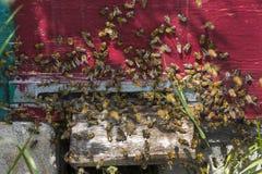 La colmena de la abeja es primer del tiro Foto de archivo libre de regalías