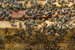 La colmena de la abeja es primer del tiro Fotografía de archivo