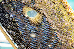 La colmena de la abeja es primer del tiro en el verano Fotos de archivo libres de regalías