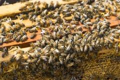 La colmena de la abeja es primer del tiro en el verano Imágenes de archivo libres de regalías
