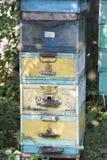 La colmena de la abeja es primer del tiro en el verano Fotografía de archivo