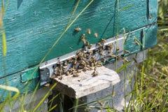 La colmena de la abeja es primer del tiro en el verano Imagen de archivo