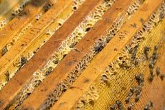 La colmena de la abeja es primer del tiro en el verano Imagen de archivo libre de regalías