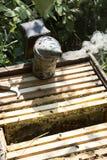 La colmena de la abeja es primer del tiro en el verano Fotografía de archivo libre de regalías