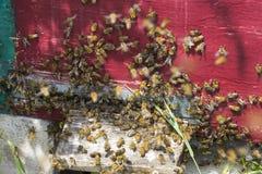 La colmena de la abeja es primer del tiro en el verano Imagenes de archivo
