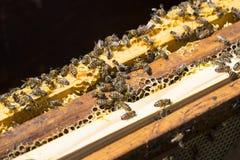 La colmena de la abeja es primer del tiro en el verano Foto de archivo libre de regalías