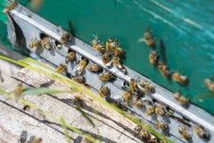 La colmena de la abeja es primer del tiro en el verano Foto de archivo