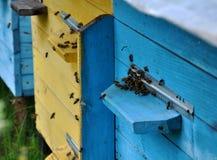 La colmena de la abeja vuela al eye_2 Fotos de archivo libres de regalías