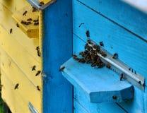 La colmena de la abeja vuela al eye_4 Fotografía de archivo