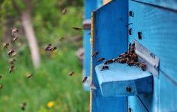 La colmena de la abeja vuela al eye_5 Fotos de archivo