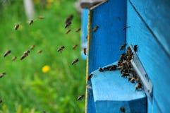 La colmena de la abeja vuela al eye_6 Fotografía de archivo libre de regalías