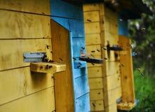 La colmena de la abeja vuela al ojo Foto de archivo