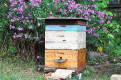 La colmena vieja de la abeja en jardín del otoño con el colorfull florece Imágenes de archivo libres de regalías