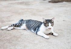 La colocación joven del gato se relaja imagenes de archivo
