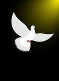 La colombe blanche vole dans l'obscurité sur la lumière divine Lueur et blanc magiques Photos libres de droits