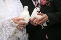 La colombe deux blanche dans les mains des nouveaux mariés se ferment  photo libre de droits