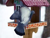 La colombe en parc d'hiver Photo libre de droits