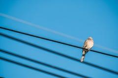 La colombe est sur le fil La colombe est une famille d'amour et d'oiseau de ture Photos stock