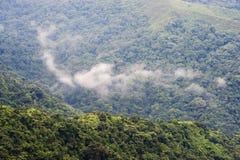 La Colombia - foresta pluviale nella sierra Nevada de Santa Marta Immagine Stock Libera da Diritti
