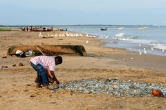 La Colombia, pescatori sulla spiaggia Fotografie Stock Libere da Diritti