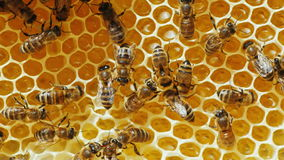 La colonia de abejas de la miel que trabajan en los panales Foto de archivo libre de regalías