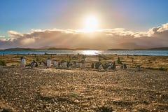 La colonia dei pinguini sull'isola nel canale del cane da lepre Patagonia dell'Argentina Ushuaia fotografie stock libere da diritti