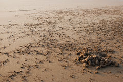 La colonia del cangrejo de orilla Foto de archivo