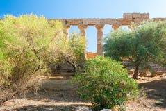 La colonnato del tempio di Juno ha circondato dagli alberi nella valle delle tempie di Agrigento Immagini Stock Libere da Diritti