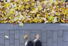 La combinaison des feuilles d'automne jaunes sur l'asphalte et les tuiles de pavage près du parking d'autobus Images stock