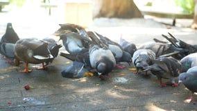 La comida de pájaro de la ciudad come metrajes
