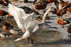la communauté d'oiseaux Photo libre de droits