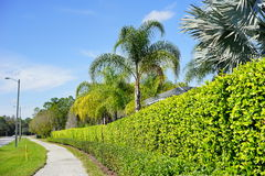 La communauté de paumes de Tampa Photos libres de droits