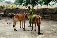 La Communauté tribale dans Bastar Images libres de droits