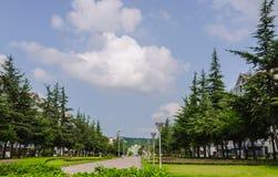 La communauté vivante verte Photo stock