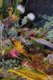 La composición de diversas flores secadas y las frutas y las setas ornamentales adorna el interior Fotografía de archivo