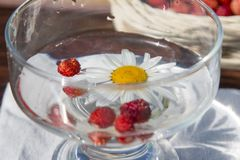 La composición de las margaritas blancas Fotos de archivo libres de regalías