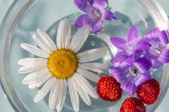 La composición de las margaritas blancas Foto de archivo