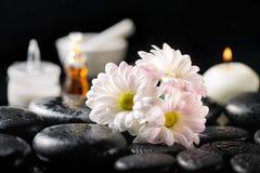 La composición del balneario de la margarita blanca florece, mira al trasluz, el aceite de la fragancia, c Imagenes de archivo