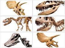 La composición del collage de los esqueletos de los dinosaurios en blanco aisló el fondo Imagen de archivo