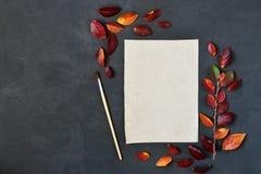 La composición del otoño con el documento, las acuarelas y el cepillo del arte sobre el tablero de tiza, adornó las hojas rojas Fotografía de archivo